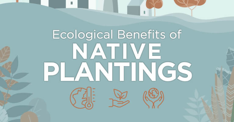 Illustration of the ecological benefits of native plantings