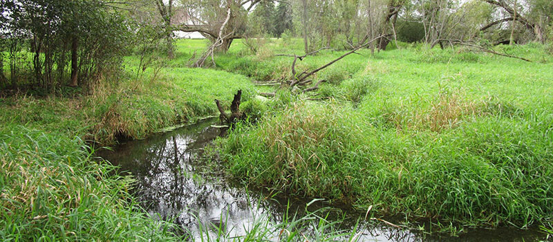Stream bank with over grown grass and foliage.