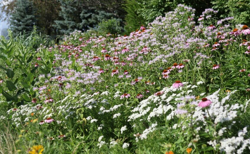 native flower bed