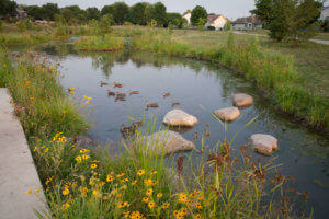 small pond as stormwater management structure with ducks on it