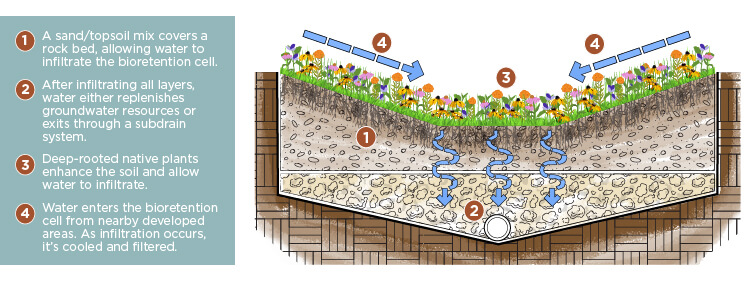 Graphic of how bioretention cells work