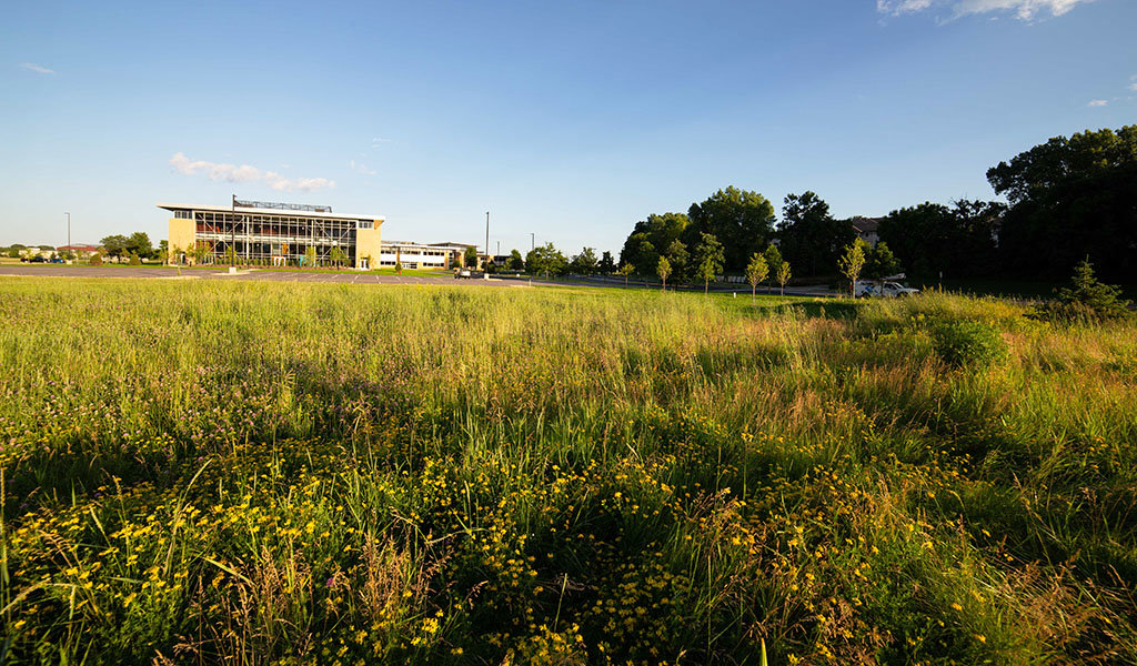 expansive area filled with native plants