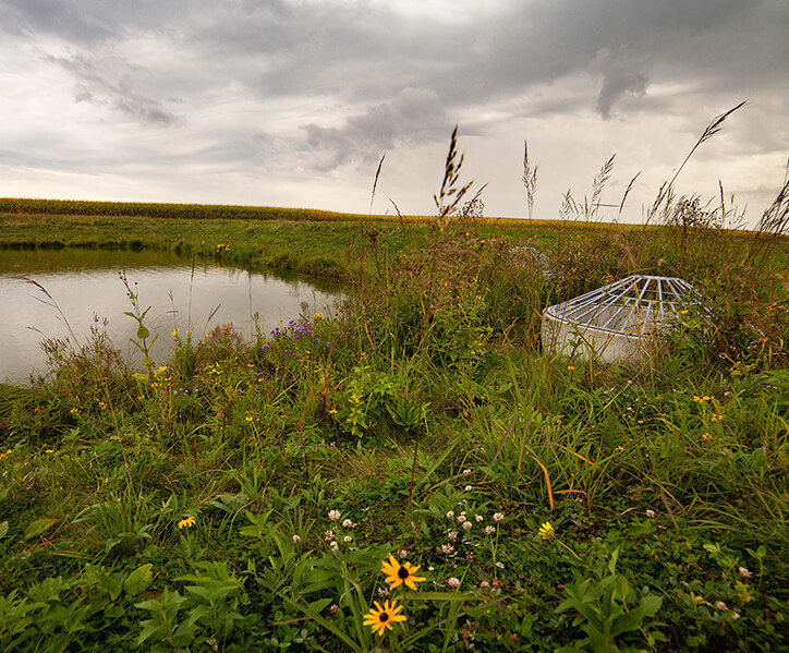 stormwater detention pond surrounded by wildflowers