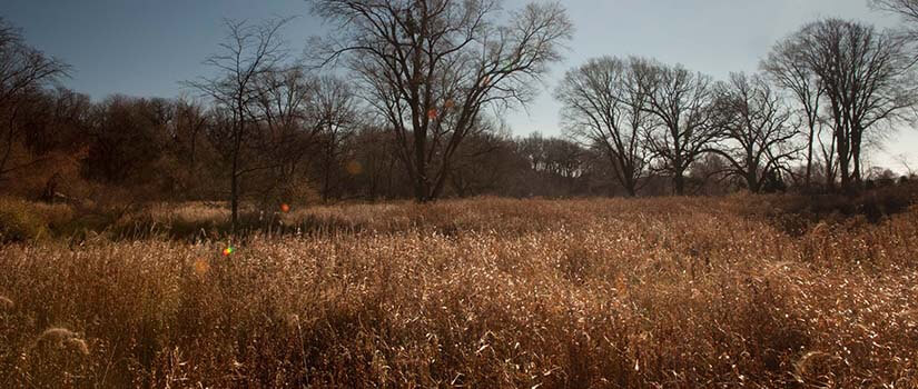Scenic wide view of Voss wetlands in Dallas County, IA.