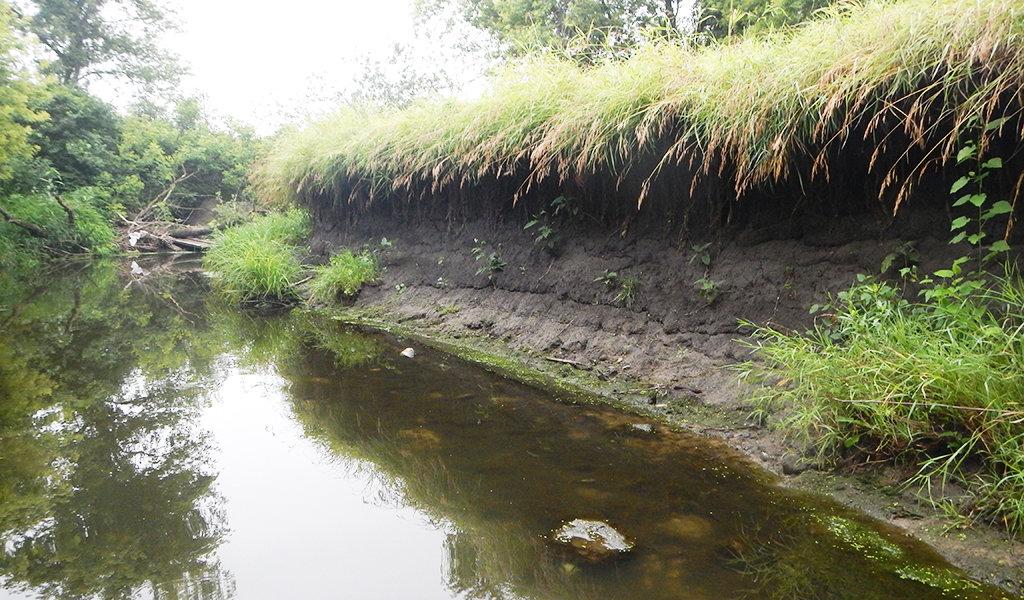 mud creek showing erosion along the banks