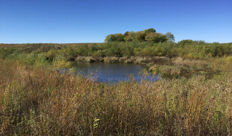 wetland during the fall season with a small pond
