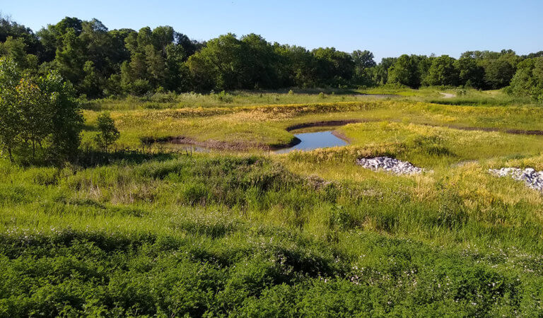overlooking green wetland area with meandering stream