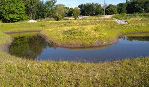 Wetland stream meanders