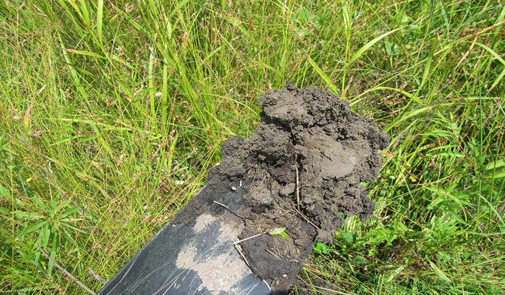 shovel holding soils during a wetland site visit