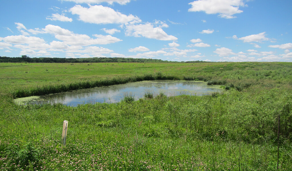 green fields with small pond under blue sky